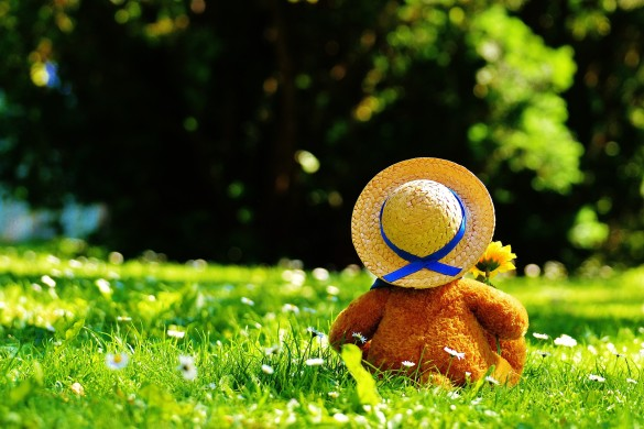 teddy-bear-797577_1920