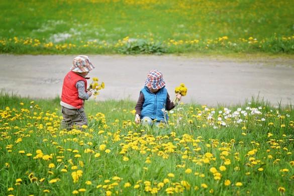 copii culeg flori